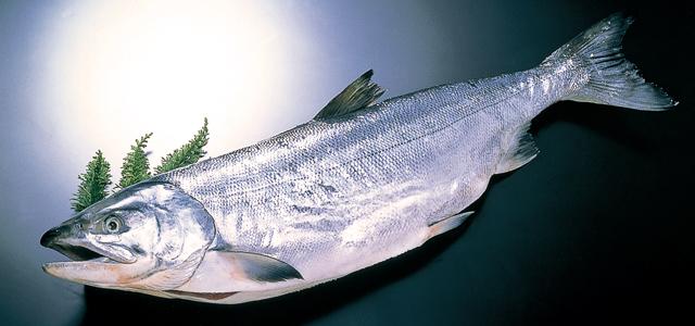 ニキビに効く鮭